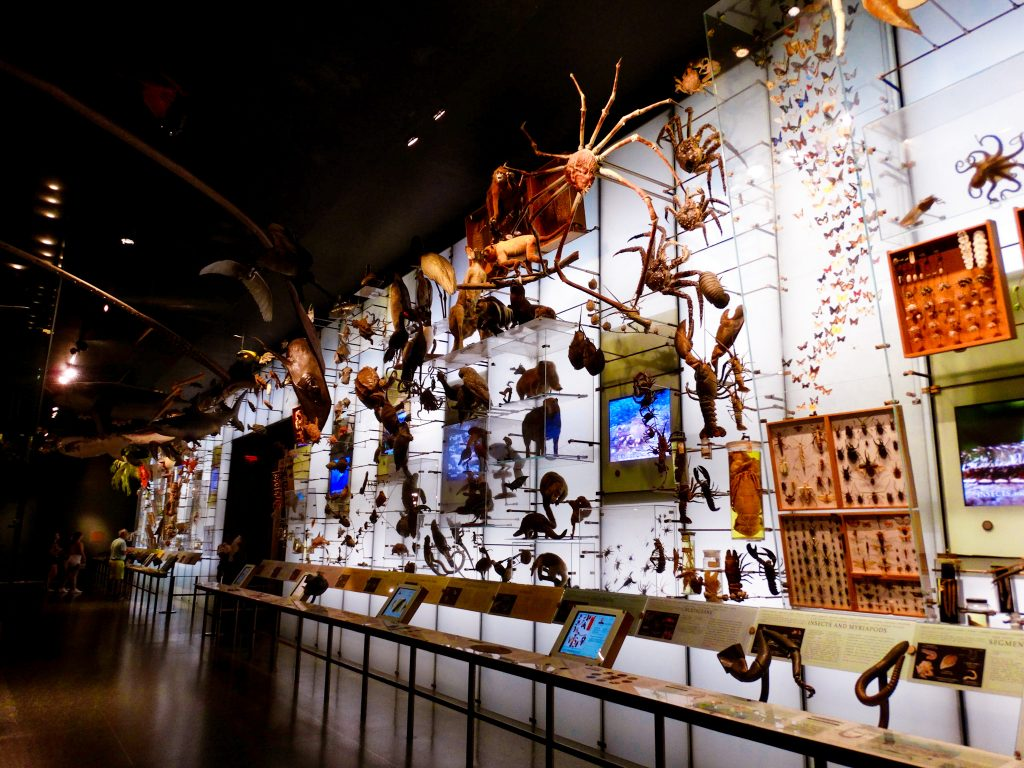 Museo Americano de Historia Natural de Nueva York.