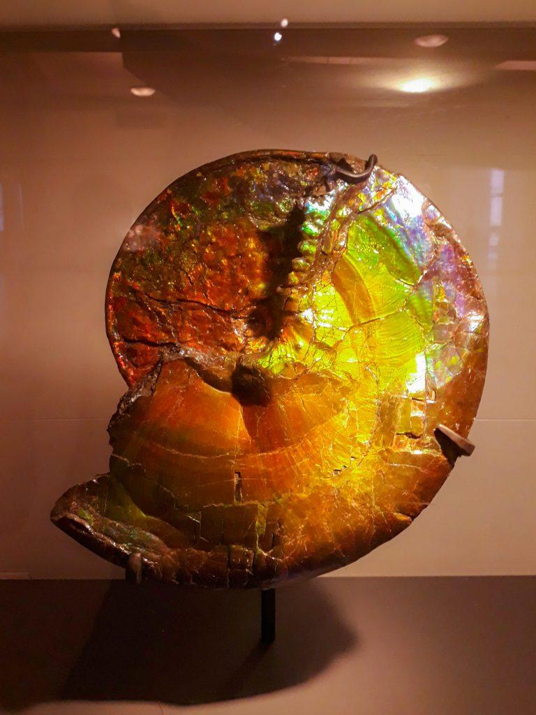 Ammonite iridiscente