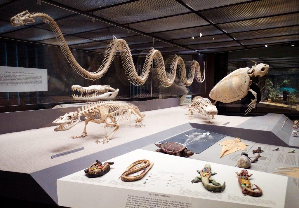 Sala de Reptiles y Anfibios