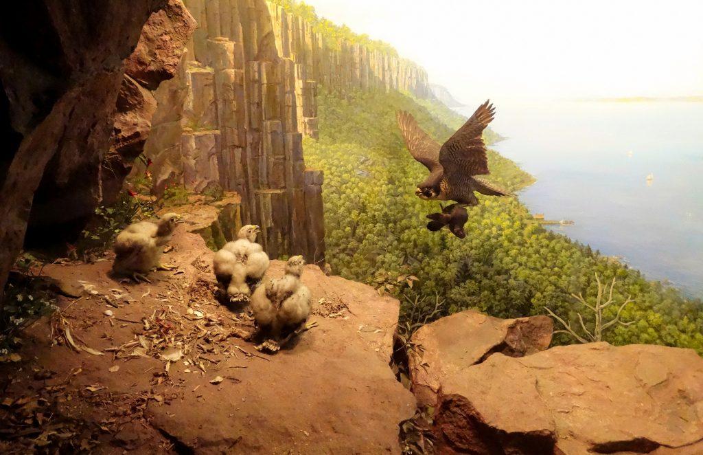 Sala de Aves Norteamericanas
