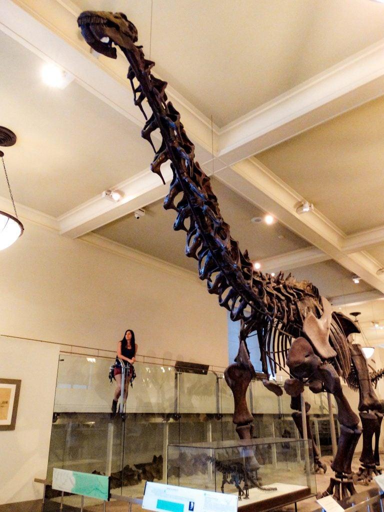 Sala de Dinosaurios Saurisquios