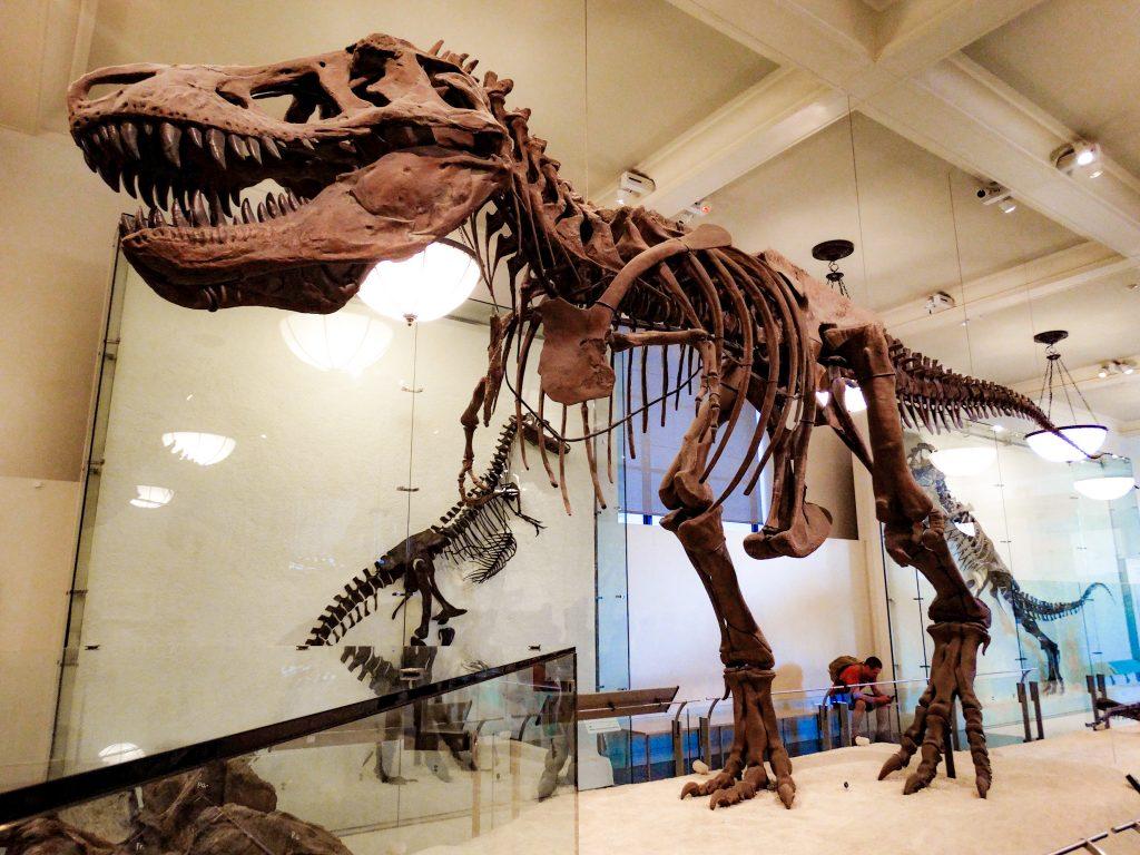 T-Rex en el Museo americano de historia natural de NY