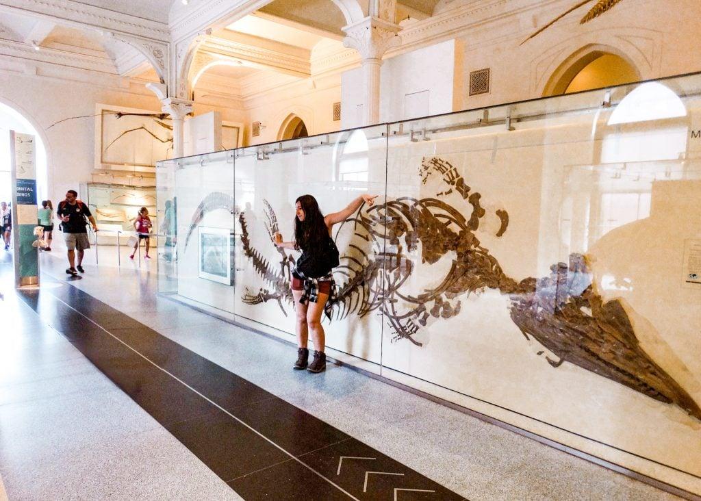 Museo de Historia Natural de Nueva York, última planta.